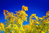 Autumn yellow foliage on sky. — Stock Photo