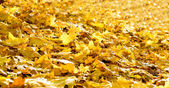Background of fallen autumn foliage — Стоковое фото