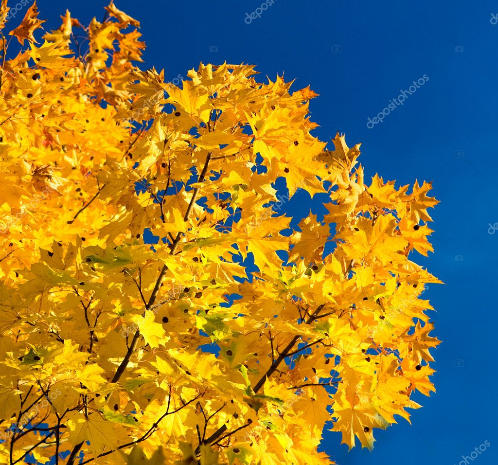 Autumn foliage and sky — Stock Photo #1030715