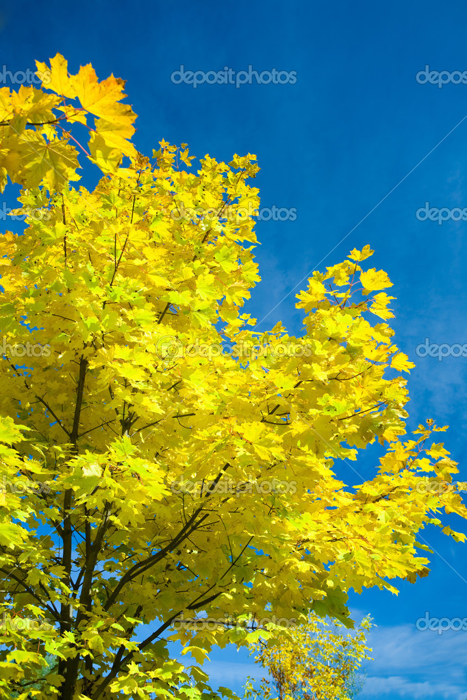Autumn yellow foliage — Stock Photo #1031900