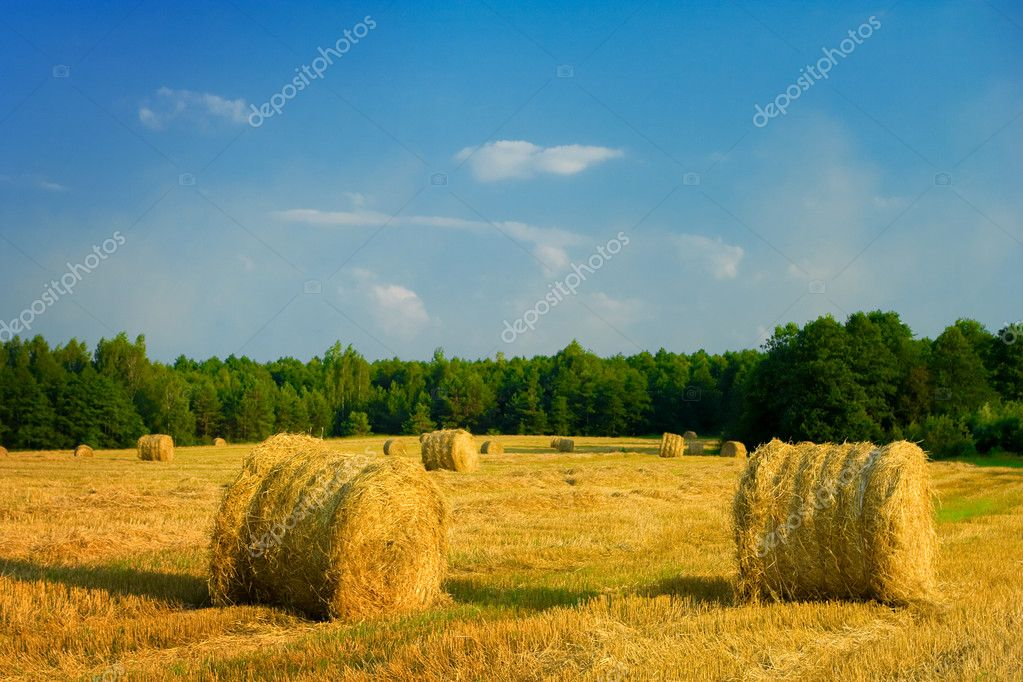 Bale of straw on a field — Stock Photo #1034140