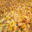 Carpet of autumn fallen foliage - Stock Photo