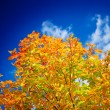 Close up yellow autumn foliage — Stock Photo #1057845