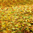 Fallen foliage — Stock Photo #1058703