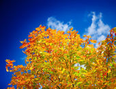 Close up yellow autumn foliage — Stockfoto