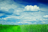 Field and cloudy sky — Stock Photo