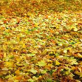 Düşen yapraklar — Stok fotoğraf