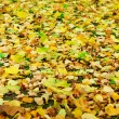Stock Photo: Capet of fallen autumn foliage