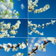 Branches blossoming — Stock Photo