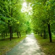 Green avenue — Stock Photo
