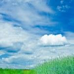 Green field - Landscape — Stock Photo