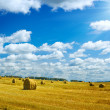 Harvesting field — Stock Photo #1078019