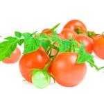 Isolated tomato — Stock Photo
