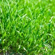 Luch green grass — Stock Photo