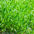 Luch green grass - Stock Photo