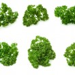 Parsley — Stock Photo #1078476
