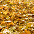 Stock Photo: Fallen yellow foliage