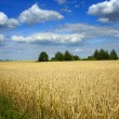 View on a summer field — Stock Photo