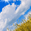 Wheat and the sun - Foto Stock