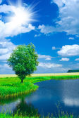 Lake on a field — Stock Photo