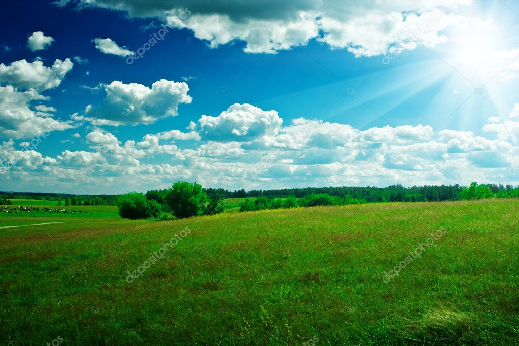 Green field with beauty blue sky and sun — Stock Photo ...