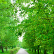 Green avenue in park — Stock Photo #1082576
