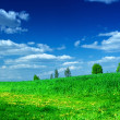 Green meadow with beauty blue sky — Stock Photo