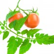 Isolated tomato and foliage — Stock Photo