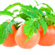 Isolated tomato with foliage — Stock Photo