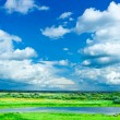 Meadow with blue sky - Stock Photo