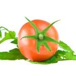 Tomato on a leaf of tomato — Stock Photo