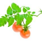 Tomato on white — Stock Photo