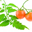 Tomato with foliage — Stock Photo #1089368