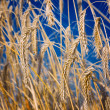 Wheat close-up — Stock Photo #1089723