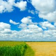 Wheat corn sky background - Stock Photo