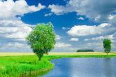 Lake-on-a-field horizonta — Stock Photo