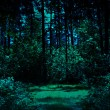 Stock Photo: Night in forest
