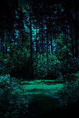 Night in a forest — Stock Photo