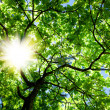 Stock Photo: Crone of tree and sun