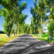 Road in the avenue — Stock Photo