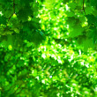Stock Photo: Green foliage