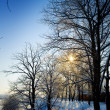 Winter view — Stock Photo #1843123