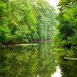 River in forest — Stock fotografie