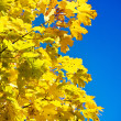 Close up yellow autumn foliage — Stock Photo
