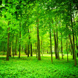 Green forest — Foto de stock #2303149