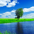 Stock Photo: Lake on summer field
