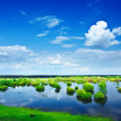 Stock Photo: View on flood field