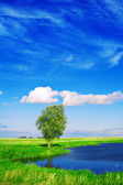 Lake on the field with beautyful sky — Stock Photo
