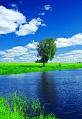 Lake on the summer field — Stock Photo