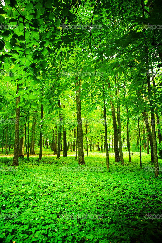 Green forest  Stock Photo #2303149
